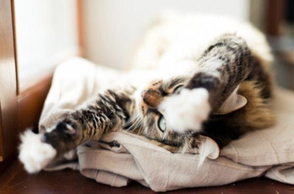 catapart vous renseigne sur les attitudes de votre chat capemploi vdi. Black Bedroom Furniture Sets. Home Design Ideas